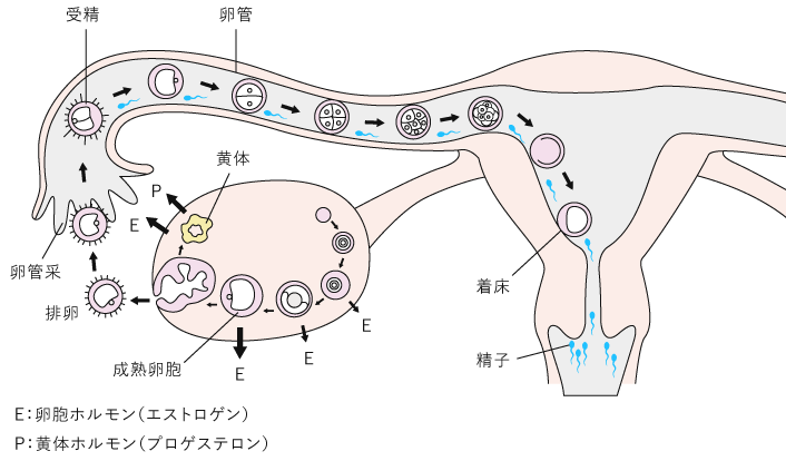 D1-a1